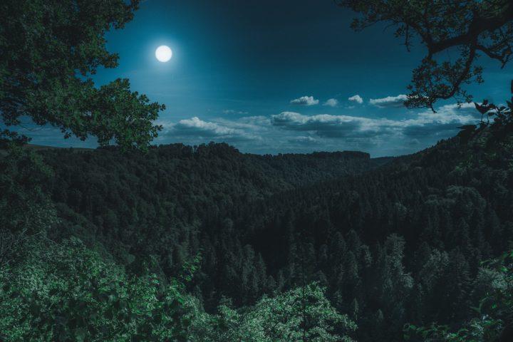 フォレノワール-黒い森
